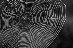 Macrofotografia in bianco e nero di una ragnatela nella fine su Immagine Stock Libera da Diritti