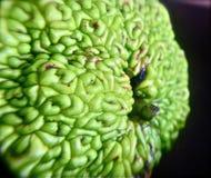 Macrofotografia del primo piano della mela della barriera Immagini Stock