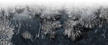 Macrofotografia della palude vergine con acqua trasparente Fotografia Stock Libera da Diritti