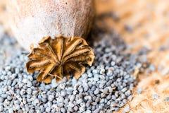 Macrofotografia delle teste del papavero e dei semi di papavero Fotografie Stock