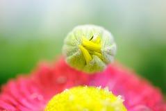 Macrofotografia di un fiore rosso Fotografie Stock Libere da Diritti