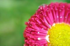 Macrofotografia di un fiore rosso Immagini Stock