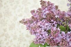 Macrofotografia lilla bella Fotografia Stock