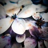 Macrofotografie van aard` s bloemen royalty-vrije stock afbeelding