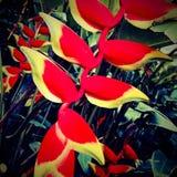 Macrofotografie van aard` s bloemen royalty-vrije stock fotografie