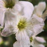 Macrofotografie van aard` s bloemen royalty-vrije stock foto's