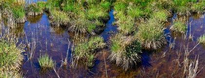 Macrofotografie van maagdelijk moeras met transparant water Stock Afbeeldingen