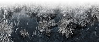 Macrofotografie van maagdelijk moeras met transparant water Royalty-vrije Stock Fotografie