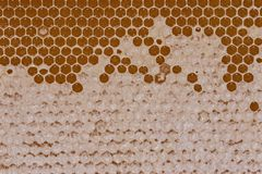 Macrohoning in honingraatpatroon met was op het royalty-vrije stock afbeelding