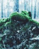 Macromagic moss royalty free stock image
