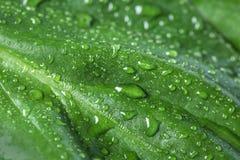 Macromening van waterdalingen op blad royalty-vrije stock afbeelding