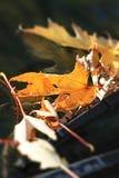 Macronadruk van de herfst de oranje bladeren op voorruit op wissers Bladeren royalty-vrije stock foto's
