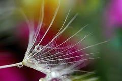Macrooh di alcune gocce il fiore Fotografia Stock