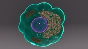 macrophage vektor illustrationer