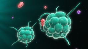 Macrophage destroying bacteria Royalty Free Stock Image