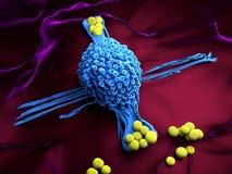 Macrophagecell Fotografering för Bildbyråer