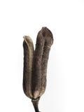 Macrophoto dell'oggetto della pianta con gli alti dettagli Immagini Stock Libere da Diritti