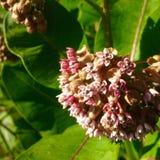 Macrophoto des belles fleurs photos libres de droits