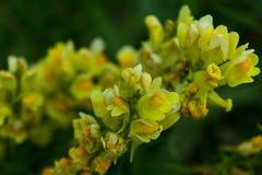 Macrophotography d'une fleur sauvage photos libres de droits