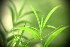 Macrophotography d'usine vert jaunâtre de forêt sur le fond vert avec l'ombre Image stock
