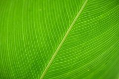 Macrophotography da textura verde da folha fotos de stock