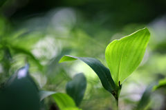Macrophotography de la sola planta verde en el fondo borroso verde y verde oscuro con el bokeh múltiple amarillo-blanco Fotos de archivo