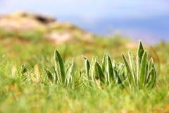 Macrophotography de plantas verdes en el prado multicolor con el fondo borroso Imagen de archivo