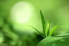 Macrophotography der einzelnen Grünpflanze auf dem Grün verwischte Hintergrund mit gelb-weißem einzelnem bokeh Stockfotografie