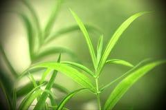 Macrophotography der gelbgrünen Waldanlage auf grünem Hintergrund mit Schatten Stockbild
