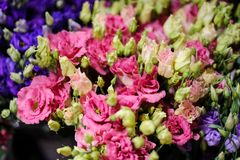Macrophotography of tender pink flowers with unopened buds. Macrophotography of a bouquet consisting of tender pink flowers with unopened buds in a flower shop Stock Photos