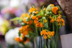 Macrophotography of tender spring orange flowers in a flower shop. Macrophotography of a bouquet consisting of tender spring orange flowers arranged in a vase on Royalty Free Stock Image