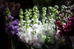 Macrophotography of tender white, purple and lilac flowers with unopened buds. In a flower shop Royalty Free Stock Photography