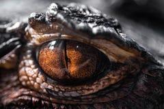 Macrophotography van het oog van de draak, amberkleur stock foto