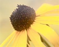 Macrophotography zijschot van de zonnebloemclose-up Stock Fotografie