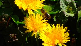 Macros en été : tirs de jardin Images stock