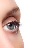 Macroschot van het mooie oog van de vrouw met uiterst lange wimpers Royalty-vrije Stock Afbeelding