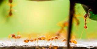 Macroschot van rode mier in aard met selectieve nadruk stock foto