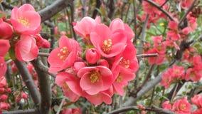 Macroschoten: mijn tuin Stock Foto's