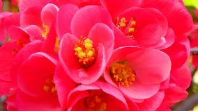 Macroschoten: mijn tuin Stock Foto