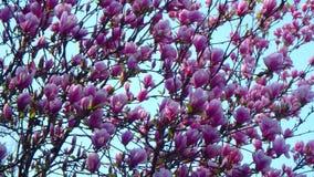 Macroschoten: mijn tuin royalty-vrije stock foto's