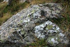 Macroshot мха на каменных горах Кавказа России Стоковое Изображение