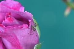 Macroshots da aranha na flor fotografia de stock