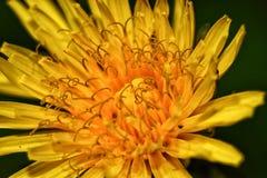 Macroshots de fleur photographie stock