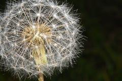 Macrospruit van bloemen die in mijn tuin, zijn close-upschot groeien stock afbeelding