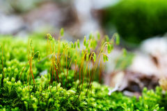 Macrospruit van groen mos royalty-vrije stock foto's
