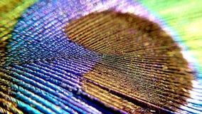 Macroview da pena do pavão Imagem de Stock