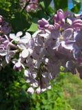 Macrovlinder Bush in Gedeeltelijke Schaduw 2 stock afbeeldingen
