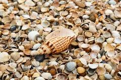 Macrowijze Grote mooie shell ligt onder vele kleine shells op de kust royalty-vrije stock afbeeldingen