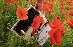 Maczek, nowa technologia, wspominanie dzień zdjęcia stock