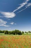 maczków krajobrazowi drzewa Zdjęcie Royalty Free